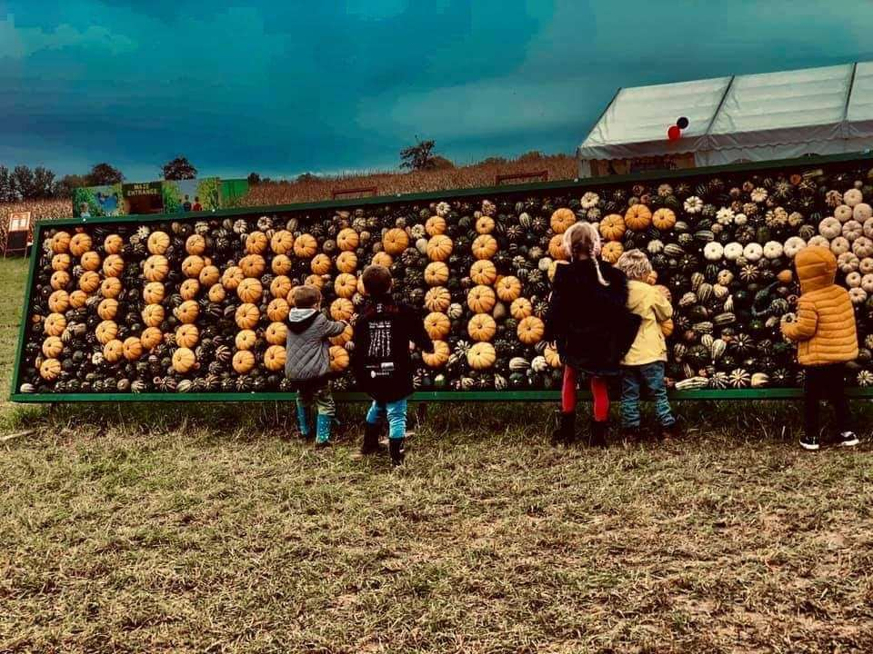 The pumpkin patch at Bury (52076373)