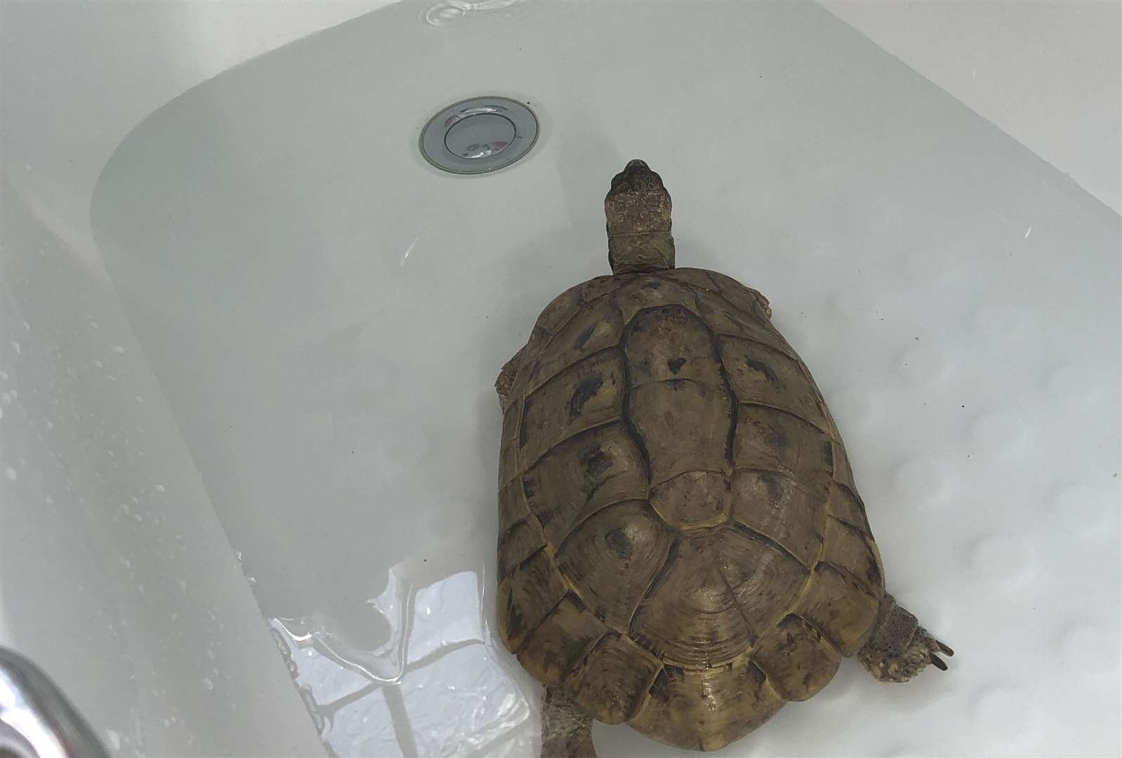 A tortoise cooling down in a bath