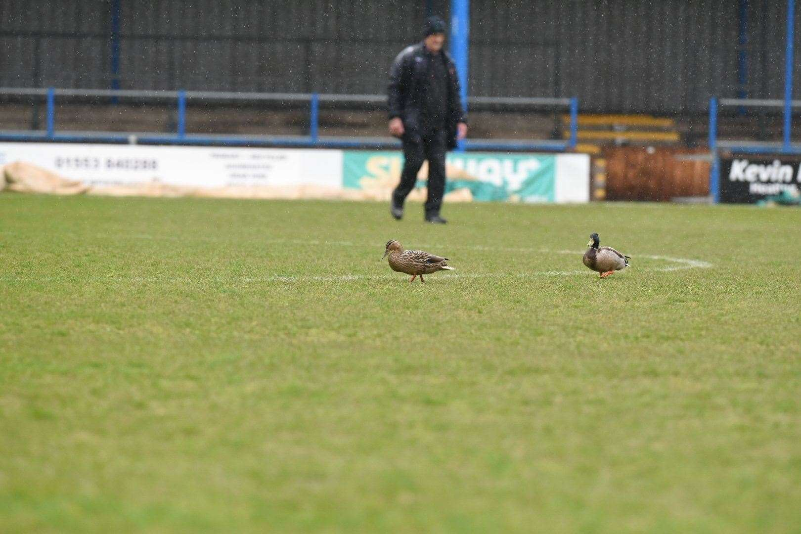 The ducks were the only ones enjoying the weather in West Norfolk this afternoon. Picture: Tim Smith (46961482)