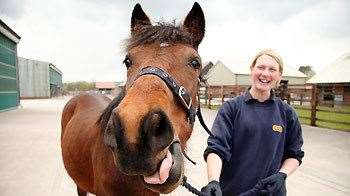 Horses are rehabilitated and rehomed by the RSPCA