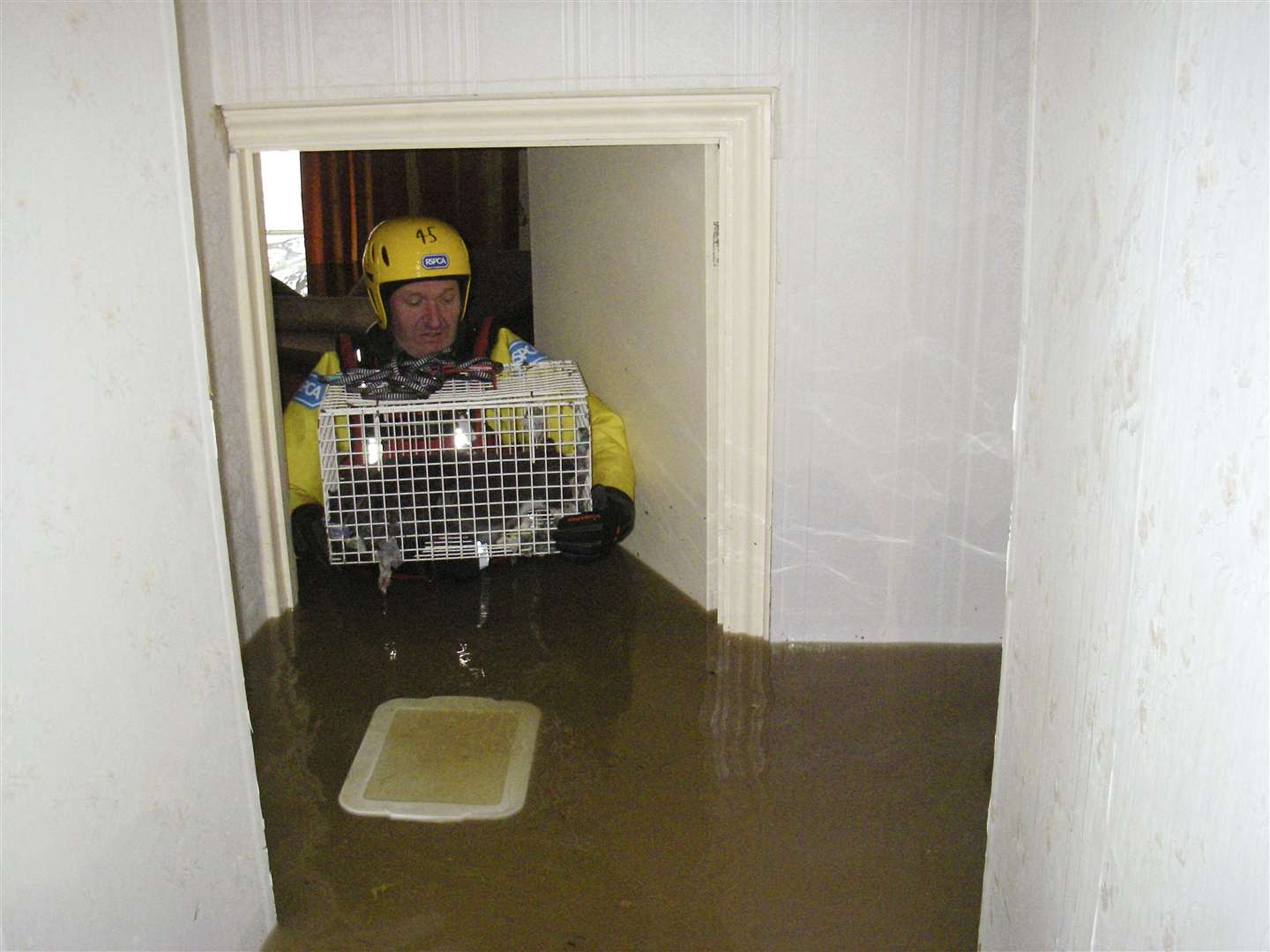 Floods 2009 Inspector rescuing single cat from flooded house. (44031853)